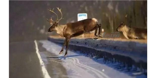 知道麋鹿测试是怎么回事吗?