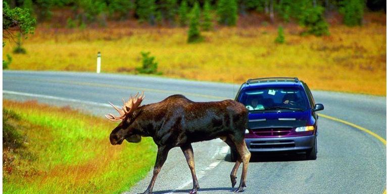 安全测试中的麋鹿测试是什么?